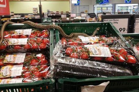 A fost gasit un sarpe in lazile cu rosii dintr-un supermarket. Angajatii au actionat gresit